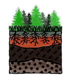 Happy World Soil Day from the PRSSS!